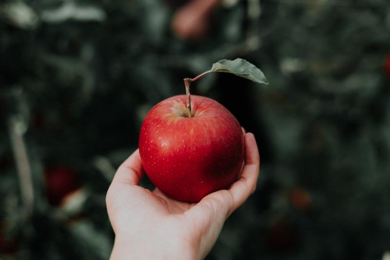 Una fotografía de una manzana en la mano de alguien - como si estuviera listo para lanzarla al aire